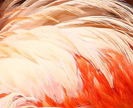 Flamingo Feathers by Derek Sherwin