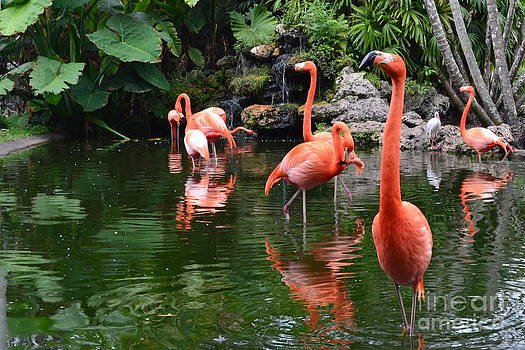 Flamingo Gardens by Janet Davaros