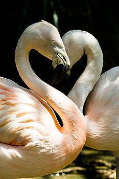 Gaurav Singh - Flamingo Heart