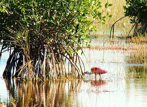 Flamingo in The Mangroves by Van Ness