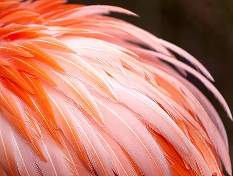 Flamingo by Laura Greene