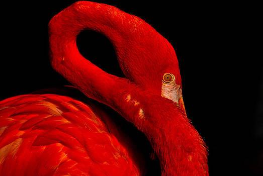 Flamingo2 by Jose Mena