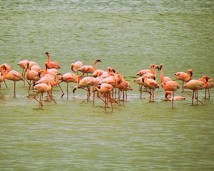 Ramona Johnston - Flamingos