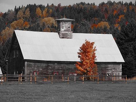 Flanders Barn by Jeanne LeMieux
