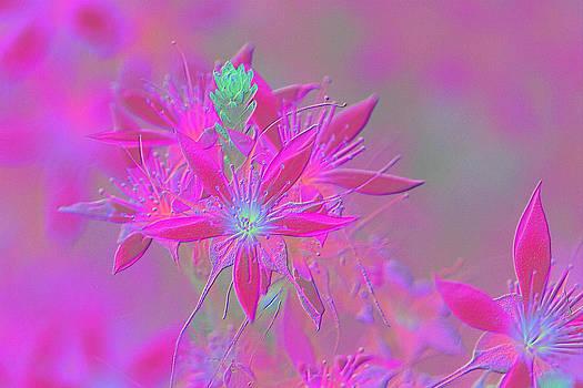 David Rich - Flannel Flower Fantesy