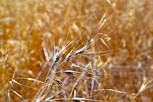 Flax by Naturae Sua