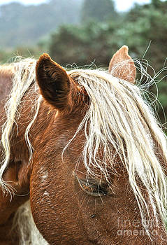 Flaxen Maned New Forest Pony II by Skye Ryan-Evans