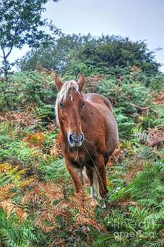 Flaxen Maned New Forest Pony III by Skye Ryan-Evans