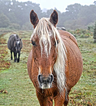 Flaxen Maned New Forest Pony by Skye Ryan-Evans