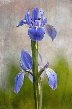 Fleur De Lis by Bonnie Barry