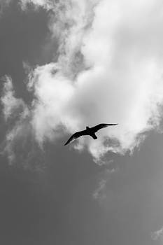Gaurav Singh - Flight