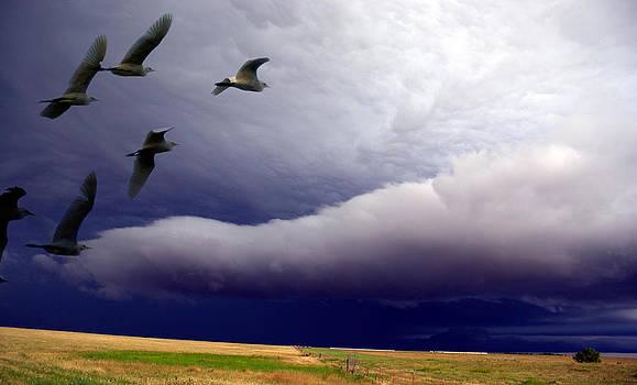 Flight Into The Storm by Yvonne Emerson AKA RavenSoul