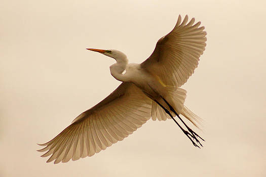 Flight by Jann Kline
