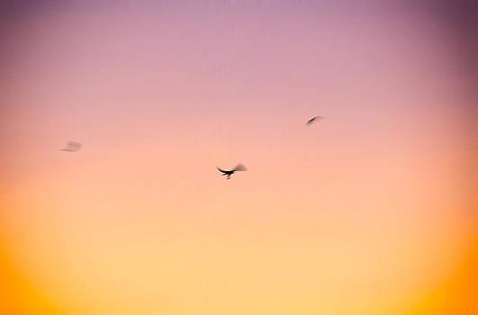 Jeremy Herman - Flight