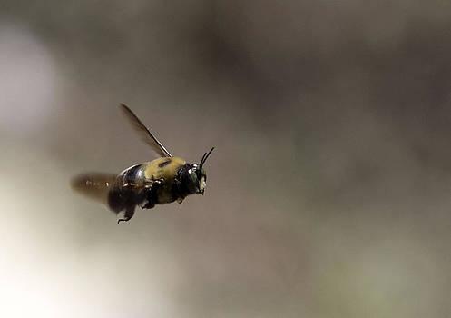 Flight of the Bumblebee by April Wietrecki Green