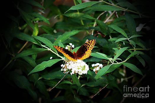 Flight of the Butterfly by Jinx Farmer