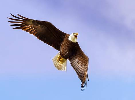 Flight of the Eagle by Mark Andrew Thomas
