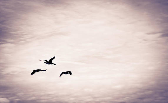 Flight Of Three by Off The Beaten Path Photography - Andrew Alexander