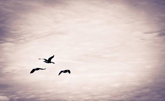 Off The Beaten Path Photography - Andrew Alexander - Flight Of Three