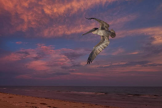 Flight over Enchanted beach by Robert Bascelli