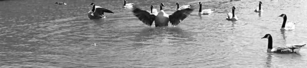 Flight by Sarah E Kohara