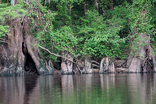 Flint River Jungle by Kim Pate