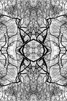 Tree No. 1 by Keith McGill