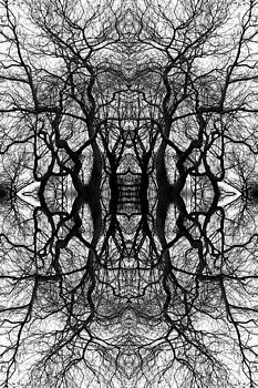 Tree No. 11 by Keith McGill