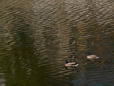Floating Alone by Bajan Sorin