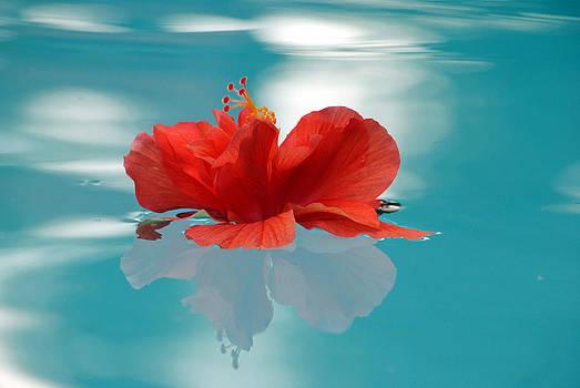 Floating by Dottie Dees