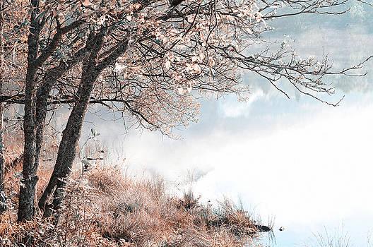 Jenny Rainbow - Floating Dream. Nature in Alien Skin