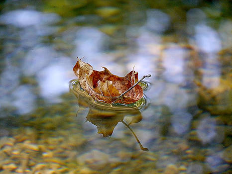 Richard Reeve - Floating Fall Leaf