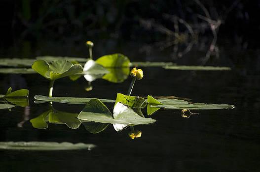 Floating Garden by Ama Arnesen