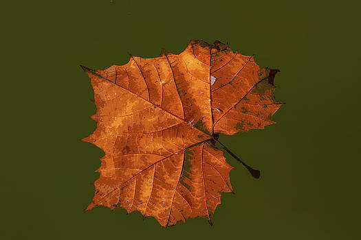 Floating Leaf by Bob and Jan Shriner