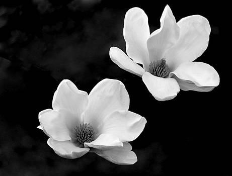 Rosanne Jordan - Floating Magnolia Blooms