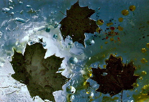 David Flitman - floating maple leaves
