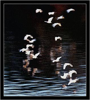 Flock of Birds on Southern Africa River by Frank Gaffney