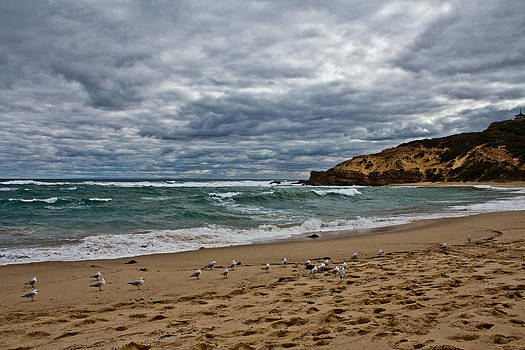 Flock of Seagulls 2 by Mamie Thornbrue