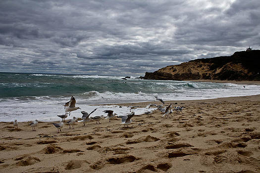 Flock of Seagulls by Mamie Thornbrue
