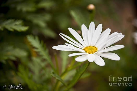 Flor01 by Omar Gonzalez