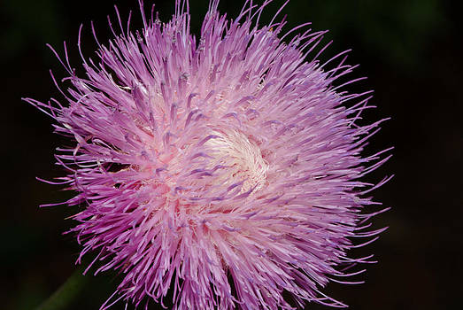 Devinder Sangha - Flora