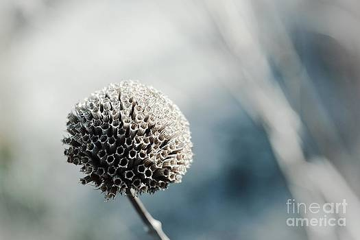 Flora by Photolope Images