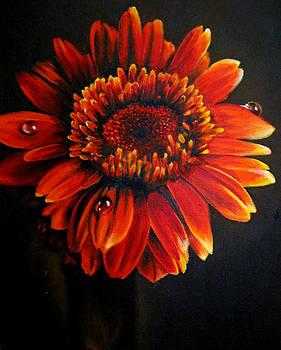Flora by Stephanie LeVasseur
