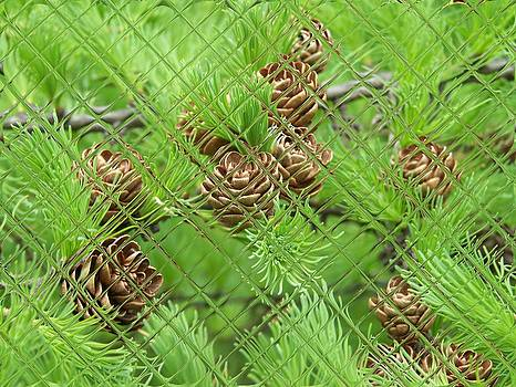 Gene Cyr - Floral Digi Manip 29