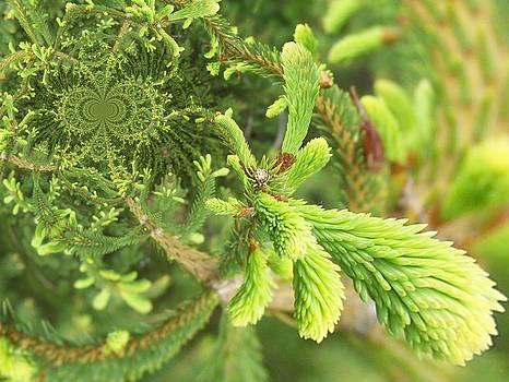 Gene Cyr - Floral Digi Manip 38