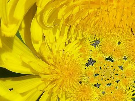Gene Cyr - Floral Digi Manip 5