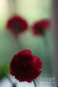 Floral Fata Morgana. by  Andrzej Goszcz