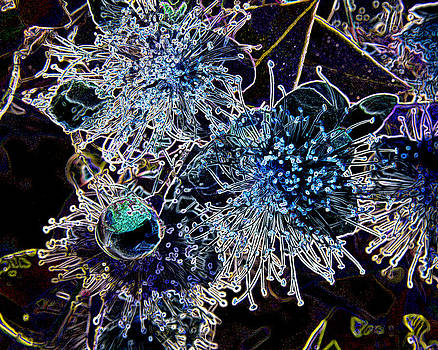Floral Frost by Kate Johnson