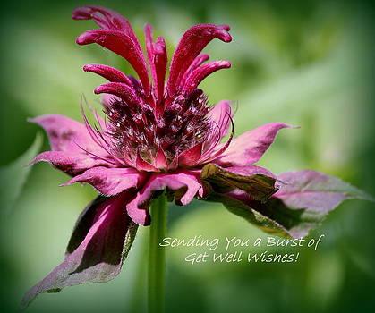 Rosanne Jordan - Floral Get Well Wishes