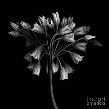 Oscar Gutierrez - Floral Hydra
